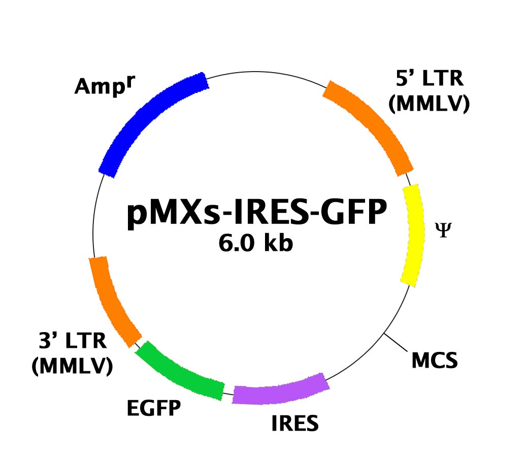 Pmxs Ires Gfp Retroviral Expression Vector