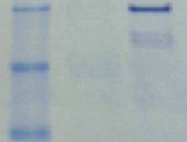 High Sensitivity Protein Quantitation Assay Kit (Fluorometric)